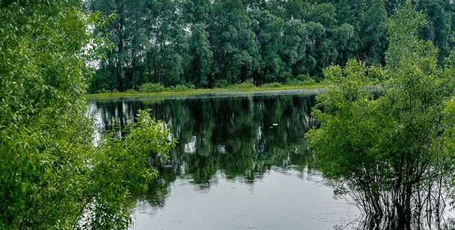 С начала купального сезона в Новосибирской области на воде погибли пять человек