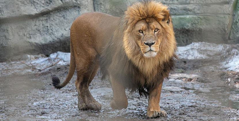 Новосибирский зоопарк и музеи откроются в ближайшие дни