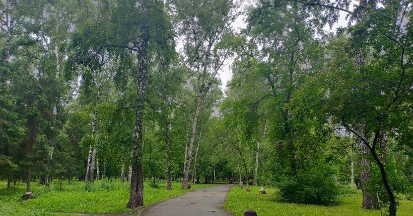 Больше двух сотен аварийных деревьев вырубят в Берёзовой роще Новосибирска