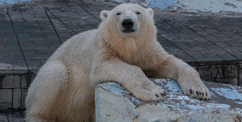 Зоопарк и музеи открываются в Новосибирской области