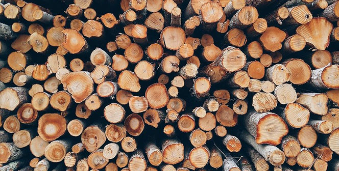 Нарубили леса на 30 млн: в Новосибирской области незаконно валили деревья