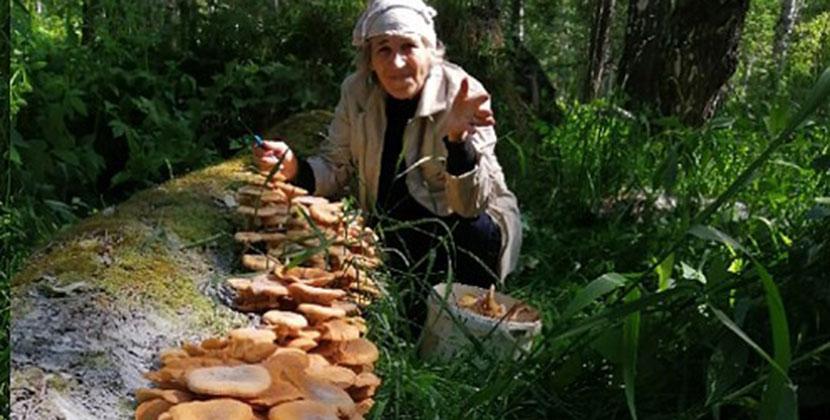 В Новосибирской области наблюдается рекордный урожай грибов