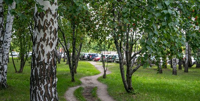 В Новосибирске во время прогулки бесследно исчез подросток