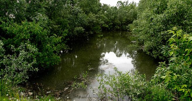 Суд запретил слив сточных вод с нефтепродуктами в реку Тула в Новосибирске
