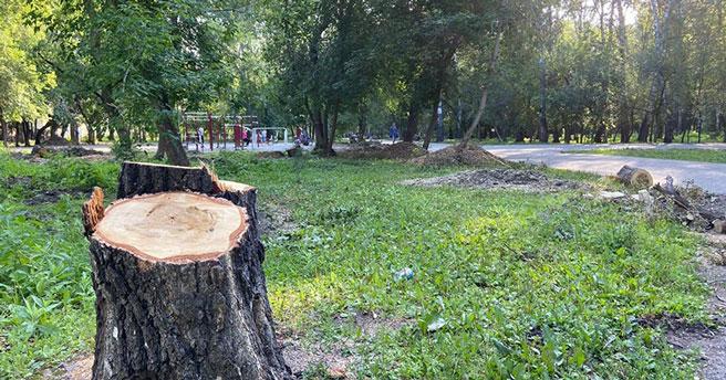 В Берёзовой роще спилили старые деревья: что будет на их месте?