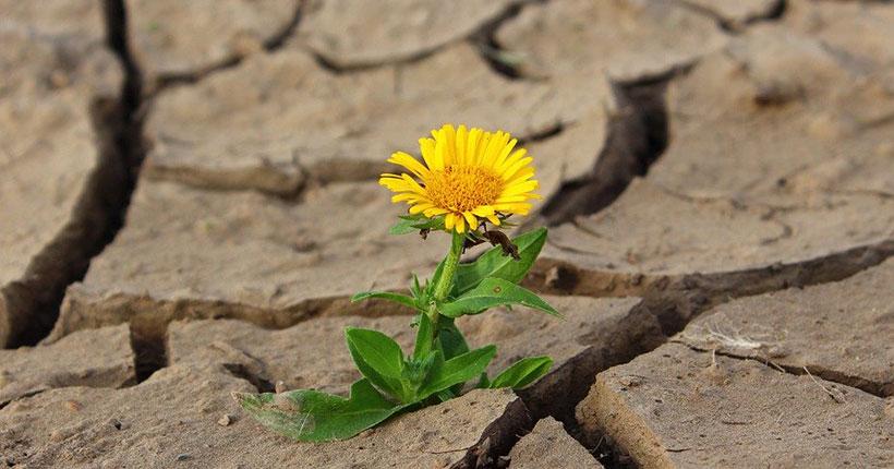В Новосибирской области с 23 июля вводится режим ЧС в связи с засухой