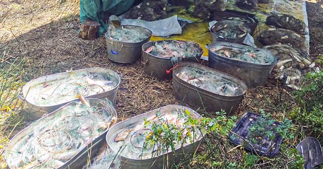 Наловил рыбы на три миллиона: в Новосибирской области задержали браконьера