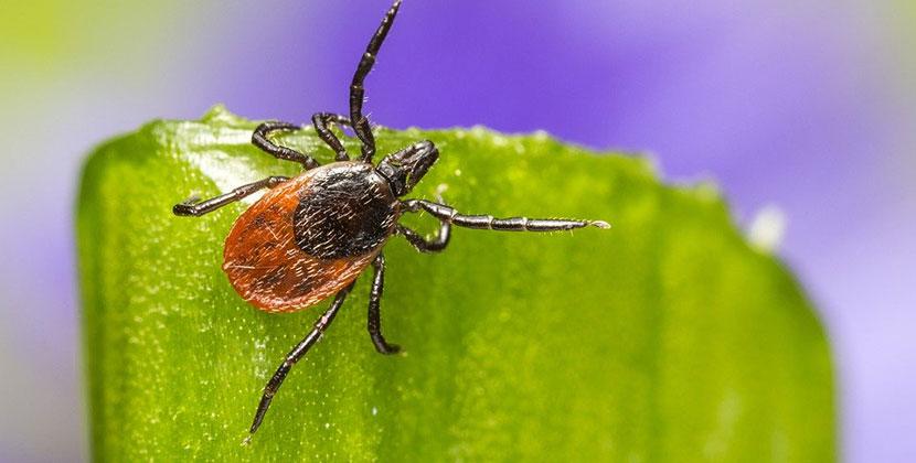 Почти 20 тысяч человек пострадали от укусов клещей в Новосибирской области с начала сезона