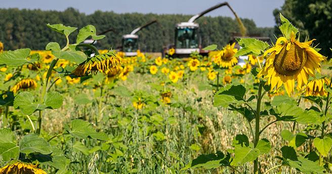 В Новосибирской области Доволенский район первым завершил заготовку кормов