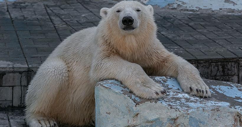 В Новосибирском зоопарке изменилось время работы