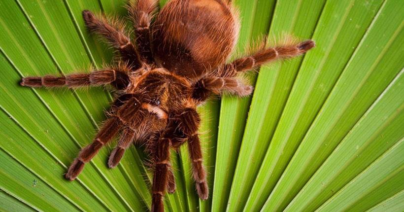 Удивительный и волшебный мир пауков: в Новосибирске открывается новая выставка