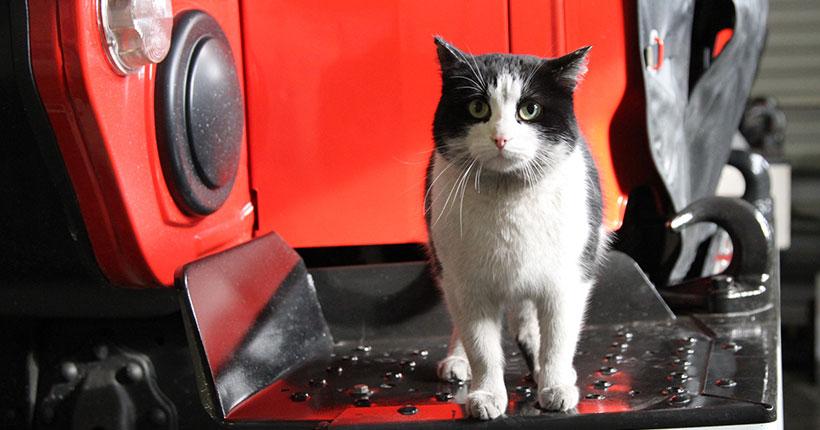 Новосибирский пожарный кот Гидрант получил поздравления со всей России
