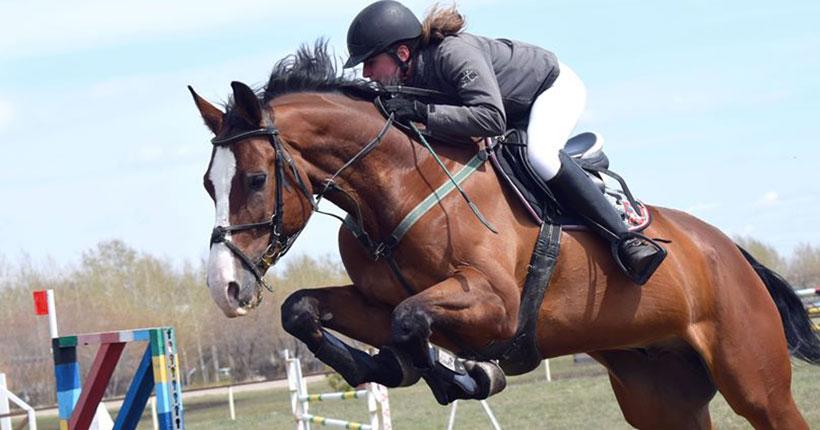 В Новосибирске проходит кубок области по конному спорту в дисциплине «троеборье»