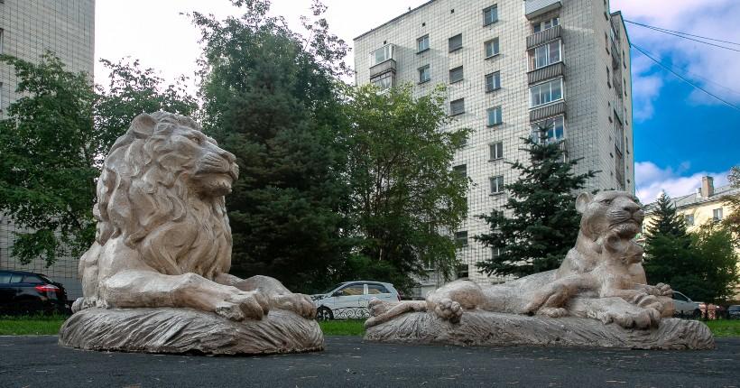 Львиными тропами