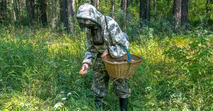 Этим летом спасатели Новосибирской области приняли 48 обращений с просьбами о поиске людей в лесу