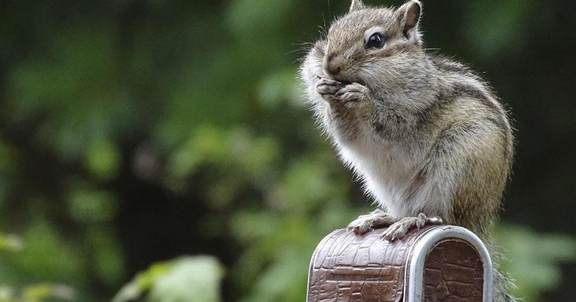 Новосибирский зоопарк пригласил жителей и гостей города на бесплатную фотовыставку
