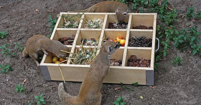 Разложили по полочкам: в Новосибирском зоопарке стали по-новому кормить животных