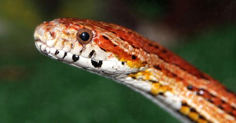 В Новосибирске во время прохождения квеста «Форт Боярд» ребёнка укусила змея