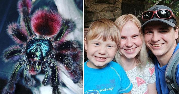 Жителю Новосибирска пришлось вместе с семьёй съехать из квартиры из-за пауков