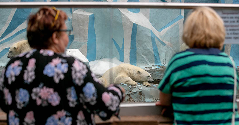 Пенсионеров приглашают бесплатно посетить зоопарк в Новосибирске