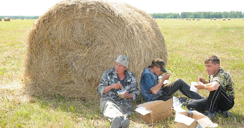 Новосибирских аграриев пригласили поучаствовать во Всероссийском флешмобе