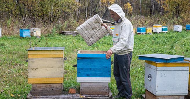 Две тонны мёда заготовил Новосибирский зоопарк для медведей и харз
