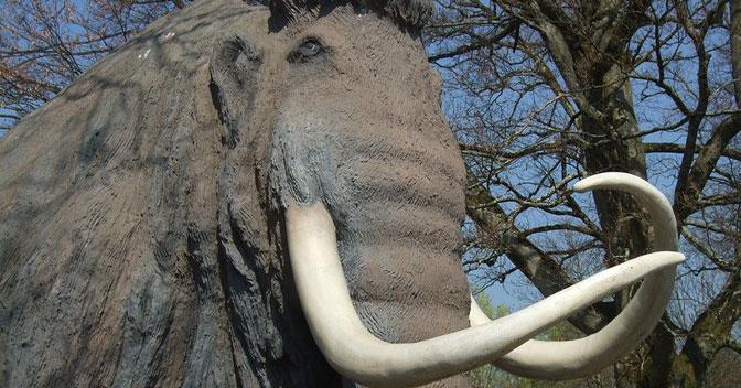 Бивни мамонта названы самой необычной посылкой, отправленной из Новосибирска