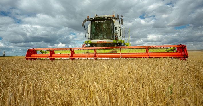 Несмотря на летнюю засуху, аграрии Новосибирской области собирают хороший урожай