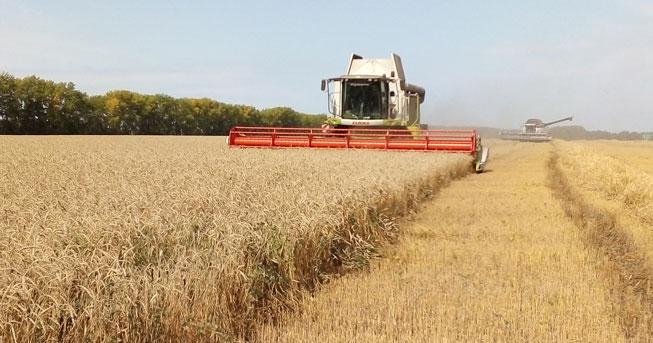 Реестр особо ценных и продуктивных сельхозземель будет создан в Новосибирской области