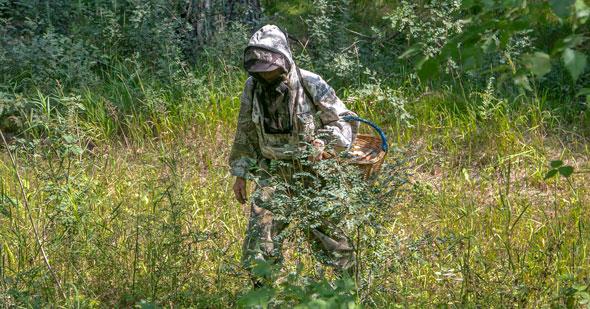 С начала года в лесах Новосибирской области потерялись более пятидесяти человек
