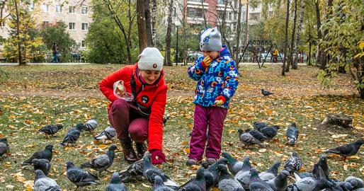 Жителей Новосибирской области ожидают тёплые выходные