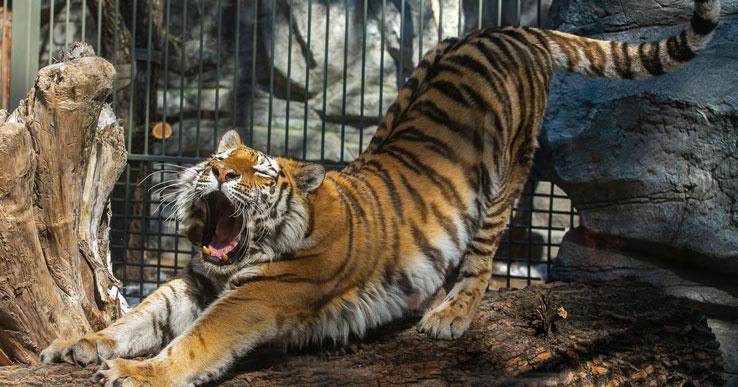 Новосибирский зоопарк объявил о переходе на новый режим работы