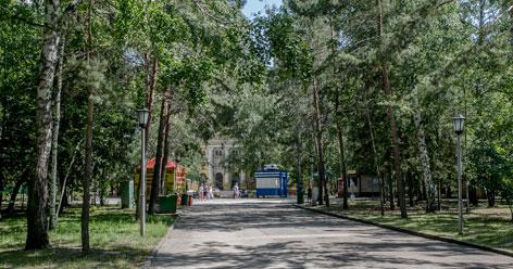 В Центральном парке Новосибирска спилят около ста деревьев