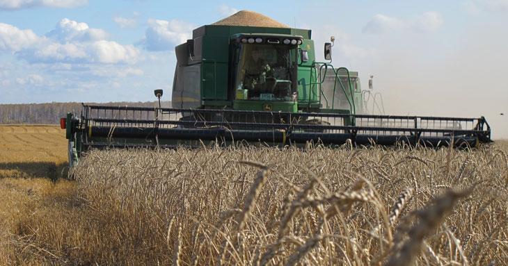 Несмотря на летнюю засуху в Новосибирской области, зерна намолотили больше, чем в прошлом году