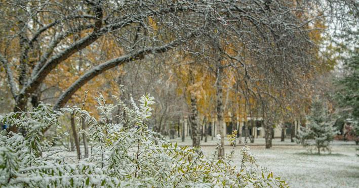 Тепло и снежно: Новосибирскую область ожидают пасмурные выходные