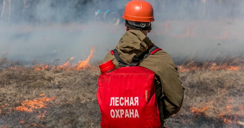 В трёх районах Новосибирской области в 2020 году не произошло ни одного лесного пожара