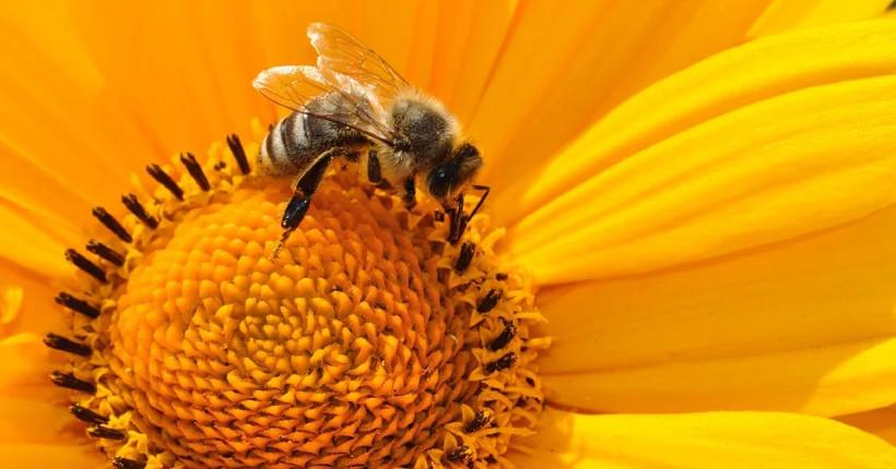 Депутаты заксобрания Новосибирской области разработают новый закон о пчеловодстве