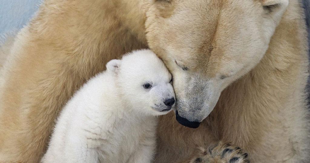 В Новосибирском зоопарке для людей с инвалидностью 1 декабря будет свободный вход