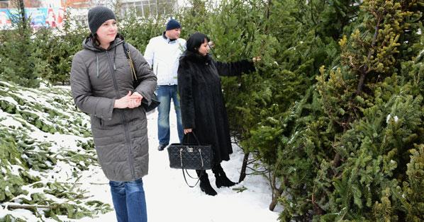 Новый год 2021: в Новосибирск привезли более трёх тысяч новогодних деревьев