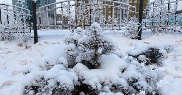 Жителей Новосибирской области в выходные ожидают ночные морозы и туманы