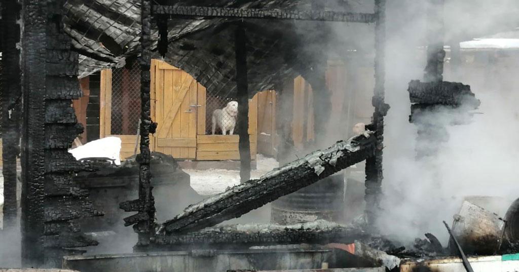В Новосибирске назвали причину пожара в приюте для животных, где погибли собаки