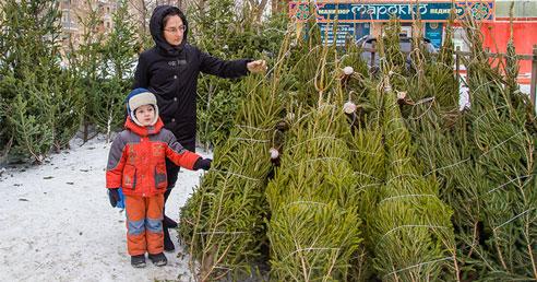 Новый год 2021: жителям Новосибирска рассказали, как выбрать ёлку