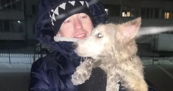 В Новосибирске собака исчезла на глазах хозяина во время прогулки