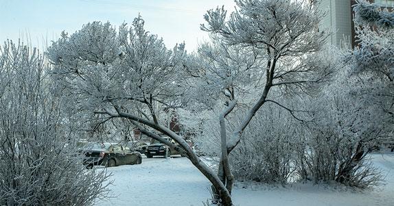 Жителей Новосибирска предупредили о снежном циклоне и похолодании