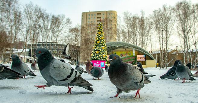 В Новосибирской области  в ближайшие дни ожидаются лютые морозы