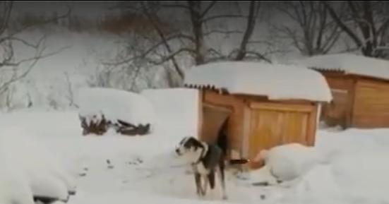 Зоозащитники спасли около семидесяти кошек и собак из плена под Новосибирском
