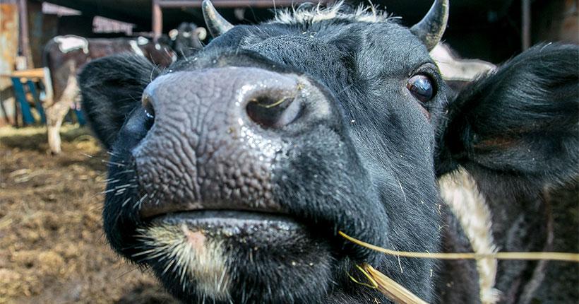 В Новосибирской области за год выявили 1 млн случаев нарушений требований пищевой безопасности