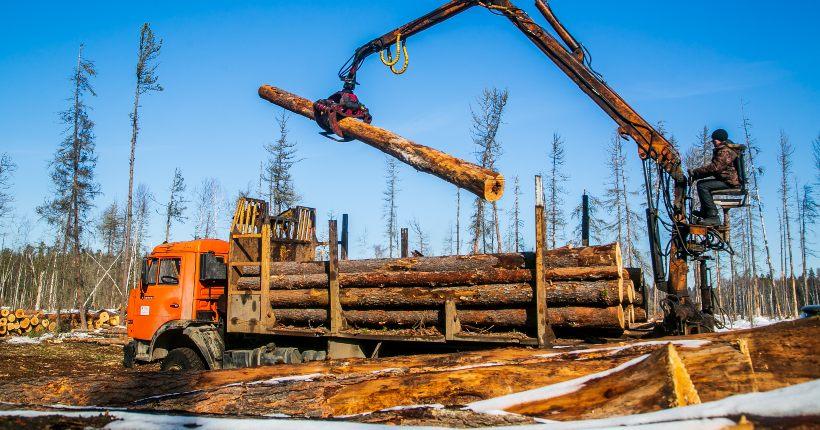 Минприроды Новосибирской области предложило конфисковывать технику, «участвующую» в незаконных рубках леса