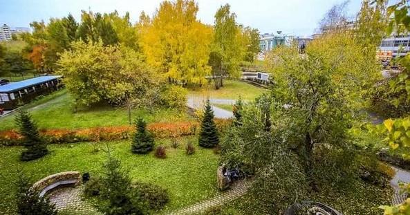В Новосибирске приняли решение создать Зелёный совет города