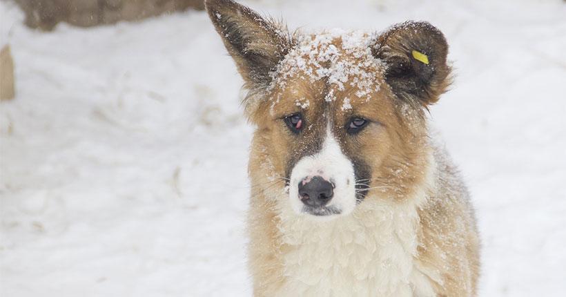 Стало известно, сколько бродячих собак и кошек обитают на улицах Новосибирска